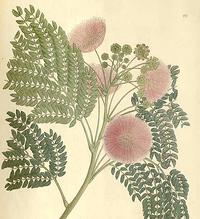 herbal school
