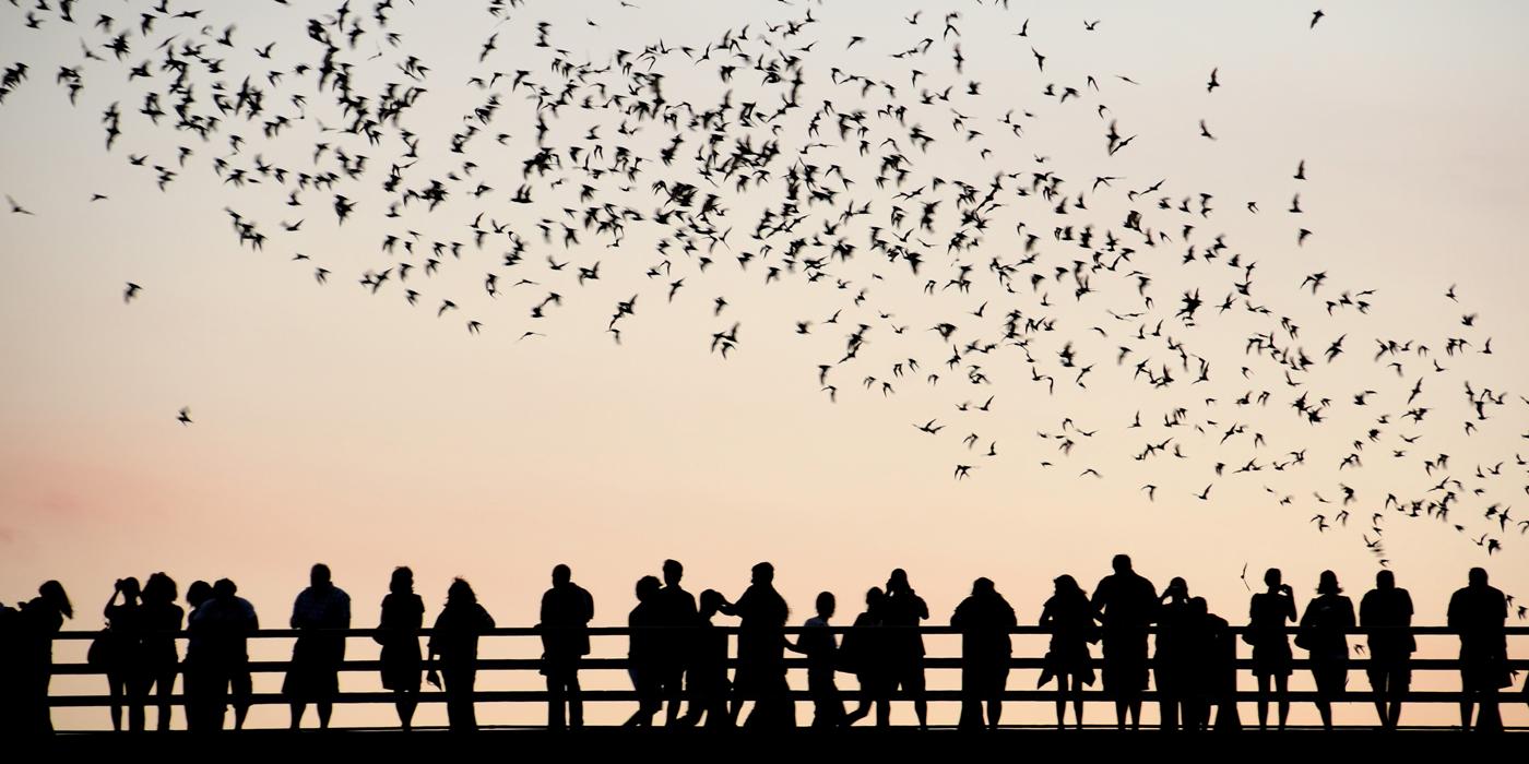 Austin TX bats South Congress bridge